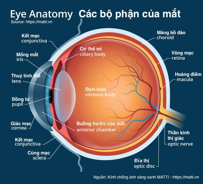 giải phẫu các bộ phận của mắt